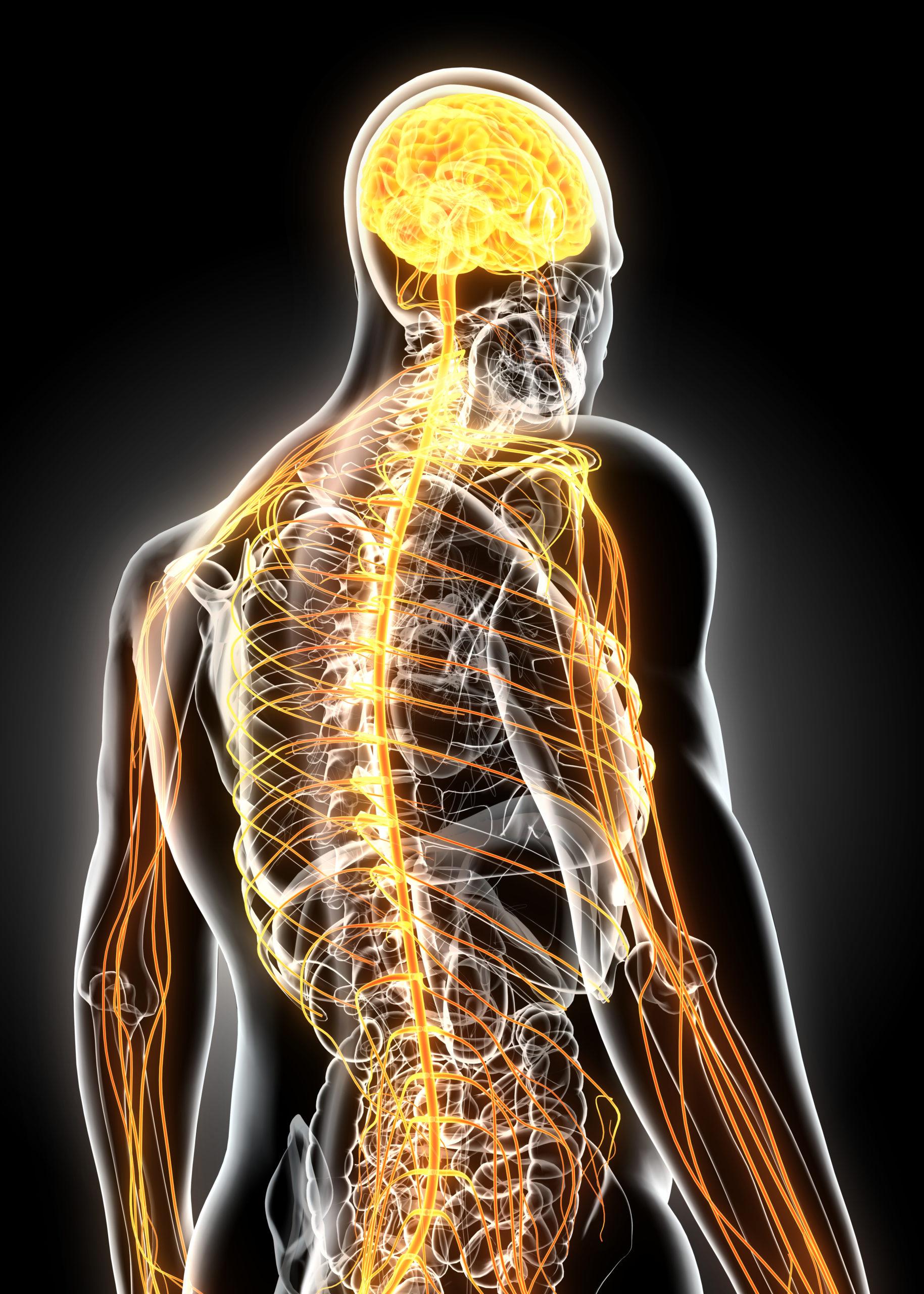 NF2 Nerven Tumor Folgen Neurofibromatose